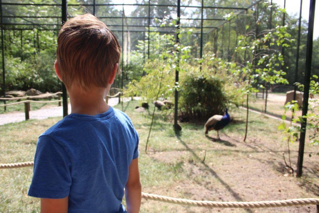 Dieren Dino Zoo Metelen