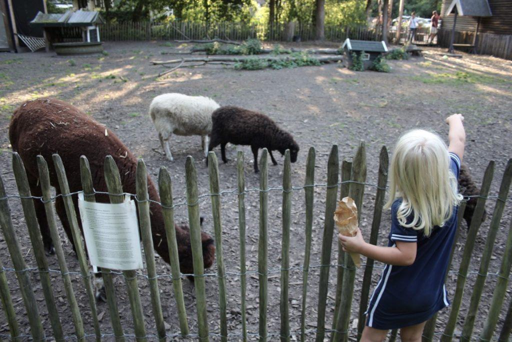 Dierenweide Camping Lelystad - Ervaring Buytenplaets Suydersee - Kamperen met kinderen