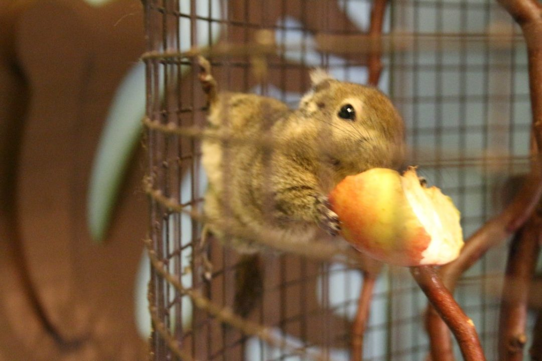 Zoo Bizar kleinste dierentuin van Nederland met kinderen bezoeken