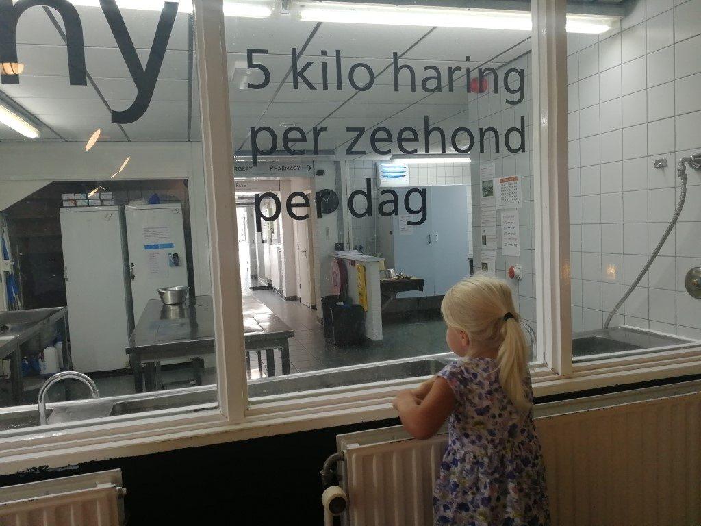 Zeehondencentrum Pieterburen met kinderen