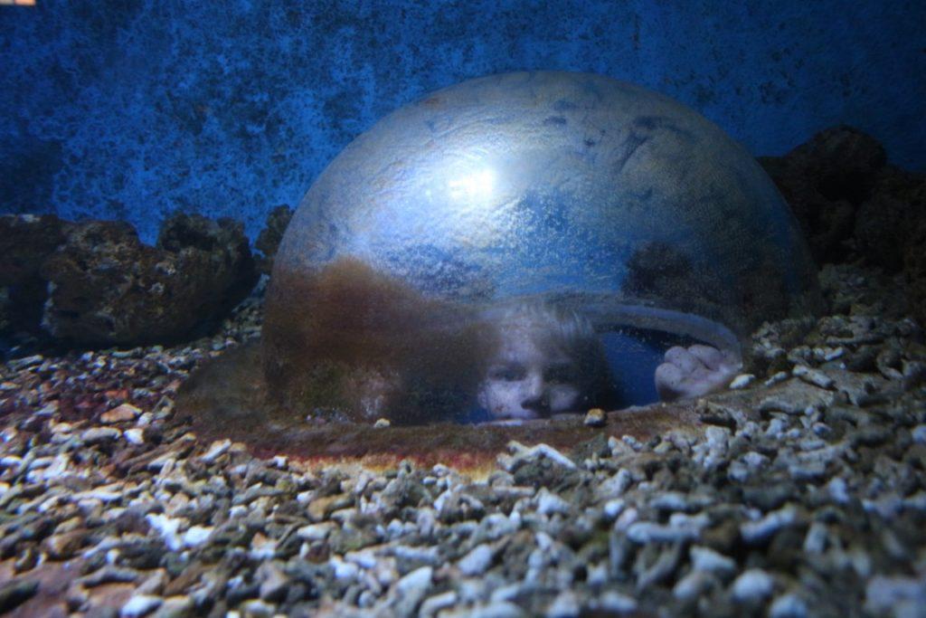 Aquarium Zeeland Arsenaal
