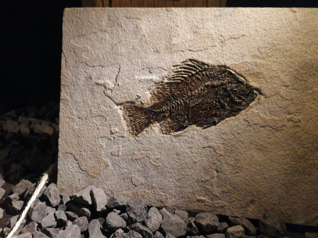 Fossielenmijn in Berkenhof Tropical Zoo