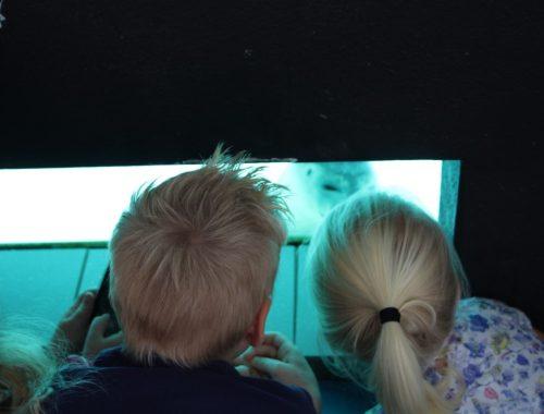 Review Zeehondencentrum Pieterburen Groningen - uitje met kinderen