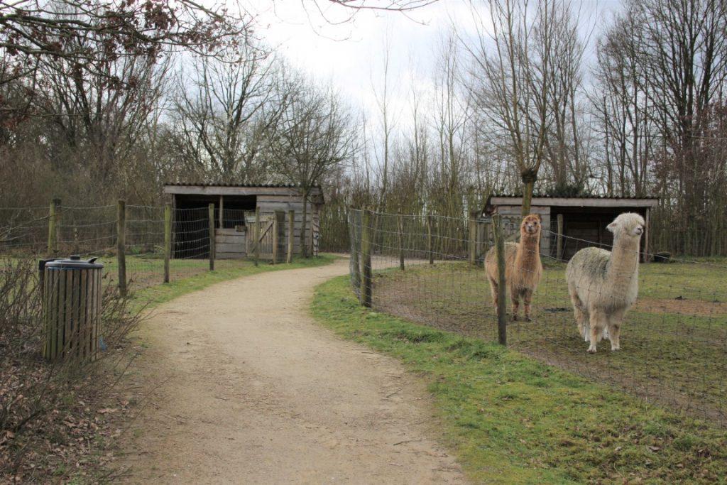 Kinderboerderij Gelderland Achterhoek