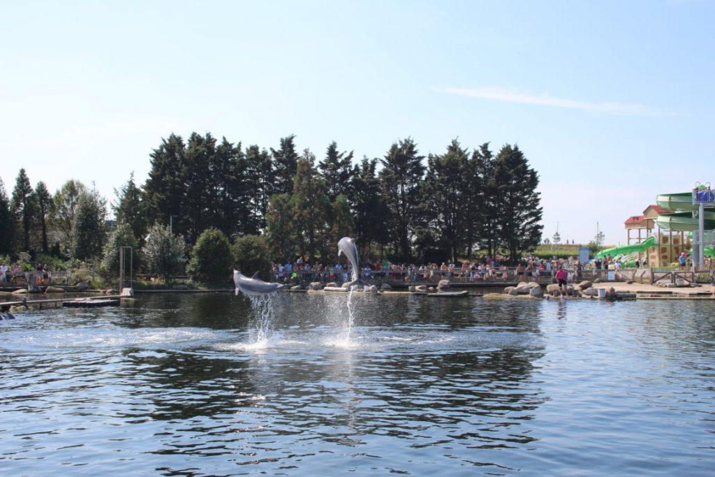 Waterpark Waterpret Zwembad Dolfinarium Harderwijk