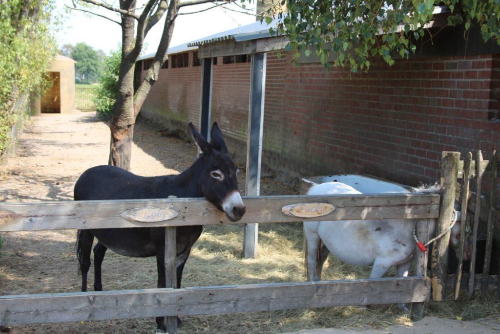 Fabor Speelboerderij Ijsboerderij Uitje Brabantse Kempen